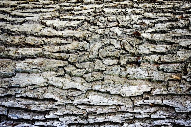 De textuur van de boomschors van een close-up van de pijnboomboomstam