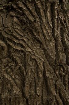 De textuur van de boomschors
