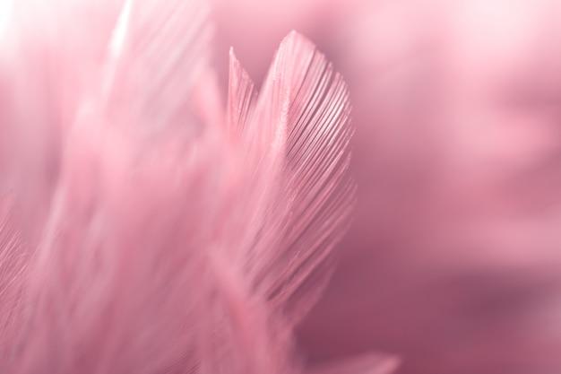 De textuur van de de kippenveer van de onduidelijk beeldvogel voor achtergrond, fantasie, abstracte, zachte kleur van kunstontwerp.