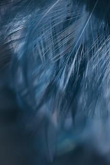 De textuur van de de kippenveer van de onduidelijk beeldvogel voor achtergrond