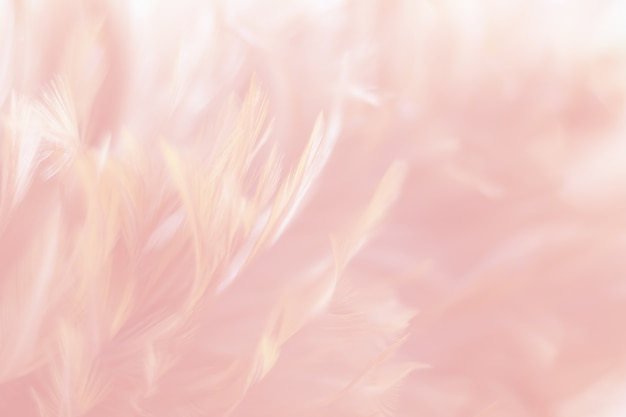 De textuur van de de kippenveer van het onduidelijk beeldvogel voor achtergrond, fantasie, abstracte, rode kleur