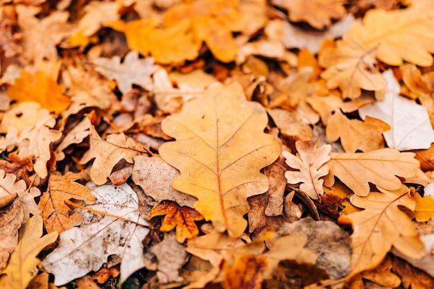 De textuur van de herfst verlaat geel eikenblad