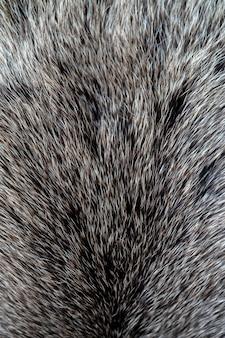 De textuur van de vacht van een beer. huid van een wild dier.