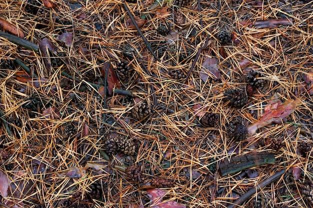 De textuur van dennennaalden op de grond.