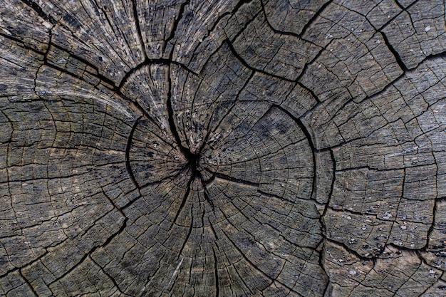 De textuur van een gebarsten boom