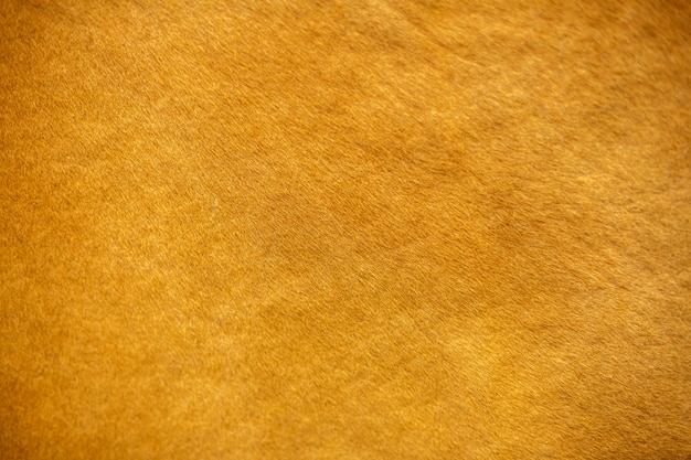 De textuur van koeienhuid, rode kleur
