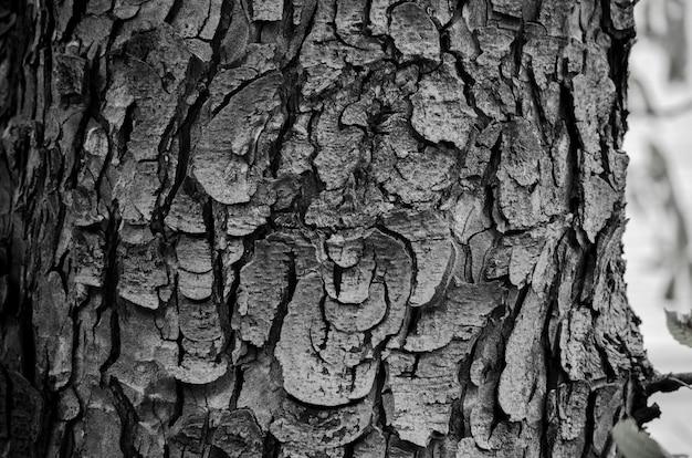 De textuurclose-up van de schors in zwart-wit