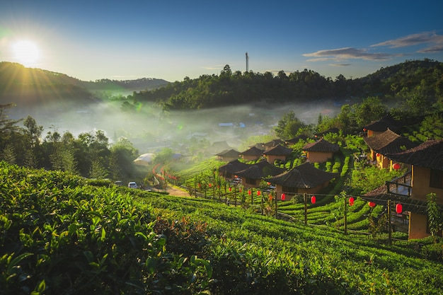 De theeplantage over de natuur in de ochtend frisse lucht bergen, zonlicht en overstraling achtergrondconcept in ban rak thai, mae hong son, thailand