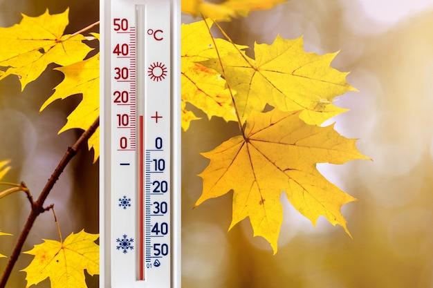De thermometer op een achtergrond van gele esdoornbladeren geeft 15 graden hitte aan. herfsttemperatuur op een zonnige dag