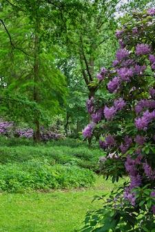 De tiergarten, wandeling door het groene prachtige park in het centrum van berlijn, groene grasvelden en prachtige bloemen