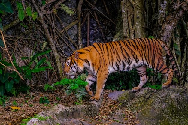 De tijger zit achter de groene takken.