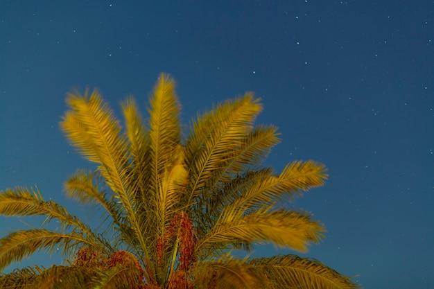 De toppen van de palm voor zonsondergang tegen de achtergrond van de avondlucht. horizontale foto