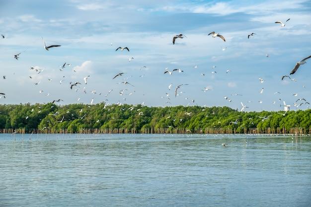 De troep van zeemeeuwen emigreert vliegend in mangrovebos bij golf van thailand