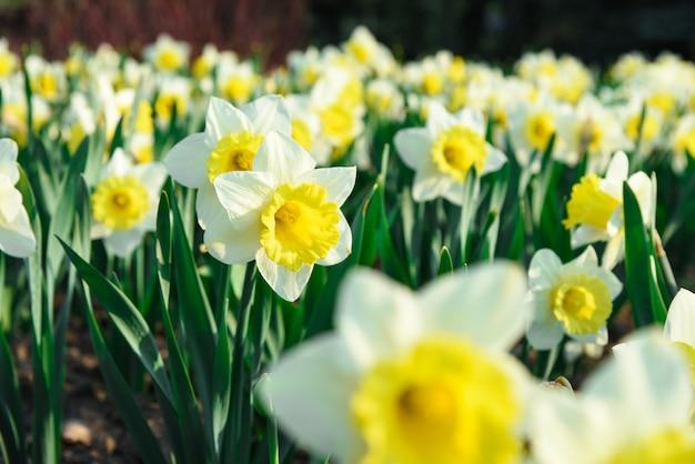 De tuinbloemen van de lente groeien op een bed