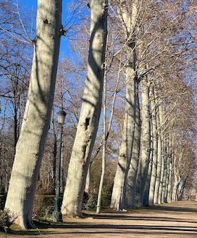 De tuinen van aranjuez zijn een reeks aangelegde en sierlijke bossen en parken in de spaanse stad