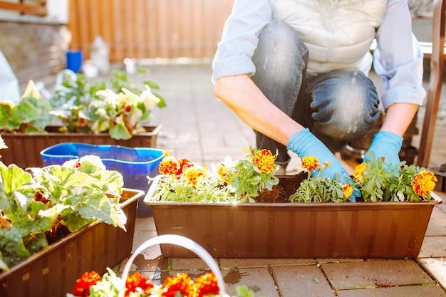 De tuinlieden overhandigen het planten van bloemen in pot met vuil of grond bij achter yar