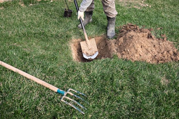 De tuinman gebruikt schop om jonge fruitboom met wortels te planten om minder belangrijke installaties in zijn boomgaard te vermenigvuldigen.