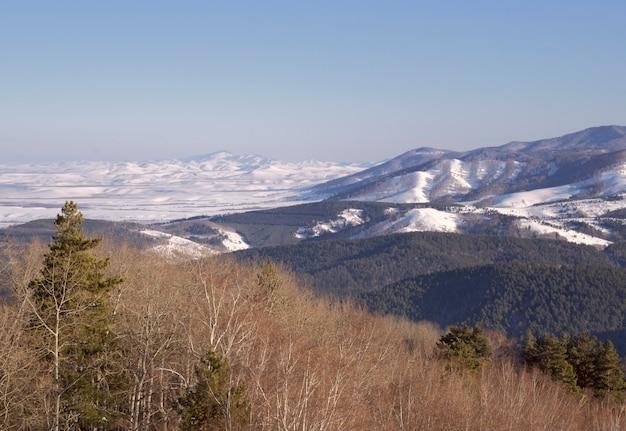 De uitlopers van het altai gebergte op een zonnige winterochtend bomen dennen en berken bergen