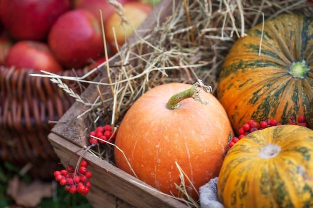 De veelkleurige pompoenen liggen op stro met een houten kist herfst tijd