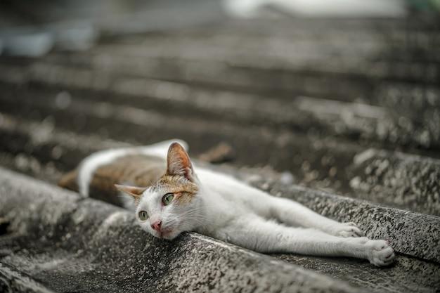 De verdwaalde kat slaapt op het dak van het huis