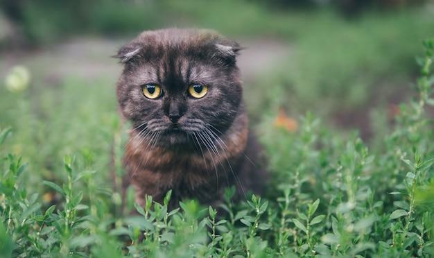De verrassing, de emotie op het gezicht van de kat