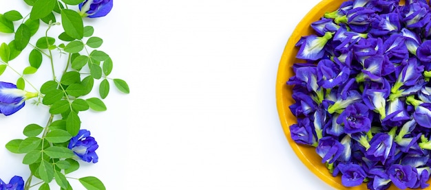 De verse bloem van de vlindererwt of blauwe erwt op witte achtergrond. kopieer ruimte
