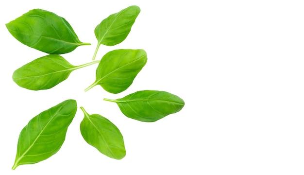 De verse groene geïsoleerde bladeren van het basilicumkruid.