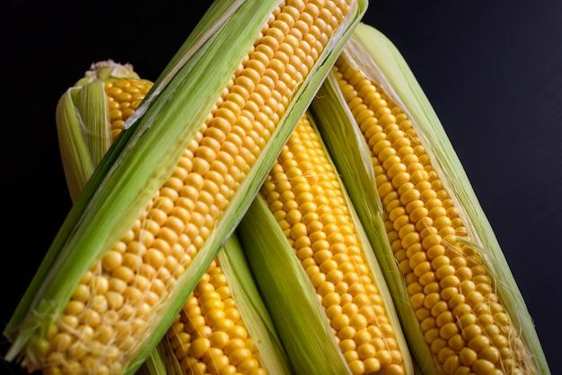 De verse maïskolven, sluiten omhoog. smakelijke kolven van rijp geel maïs met groene bladeren liggen op een zwarte