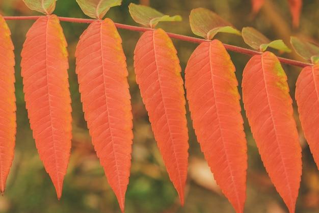 De vertakking van de beslissingsstructuur met herfstbladeren.