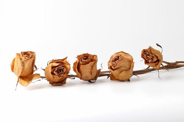 De vijf gedroogde rozen op wit