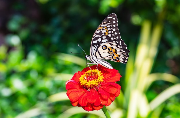 De vlinder op de rode bloem Premium Foto