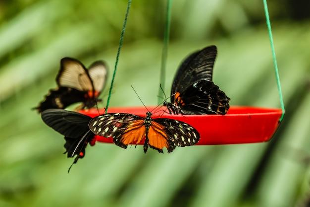 De vlinders plaatsen op voedervoeder in tuin.