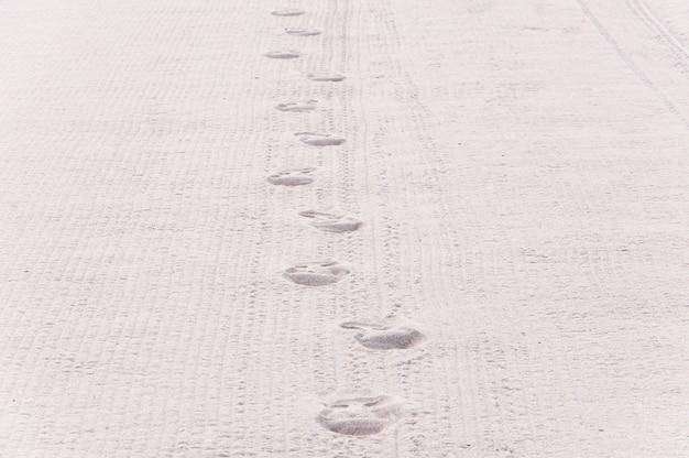 De voetafdruk op het strand