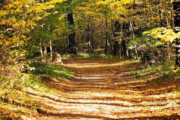 De voetweg die door park loopt. herfstseizoen