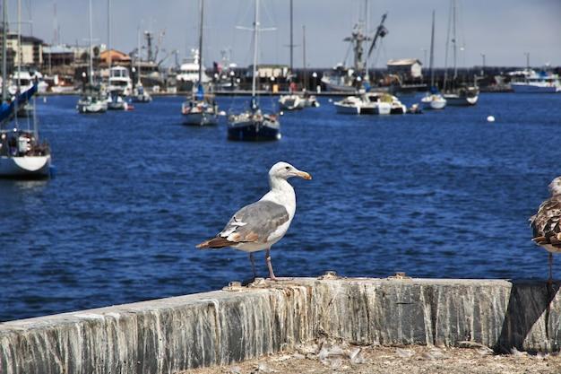 De vogel in de jachthaven, monterey-stad, westkust, verenigde staten