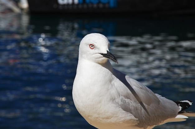 De vogel in queenstown op zuid-eiland, nieuw-zeeland