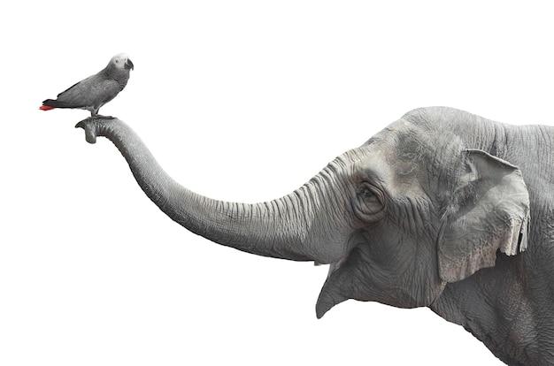 De vogel rust op de slurf van de olifant