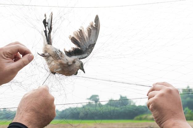 De vogels werden gevangen door de hand van de tuinman die een gaas op wit vasthield