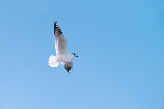 De vogelvlieg van de zeemeeuw in de blauwe hemel