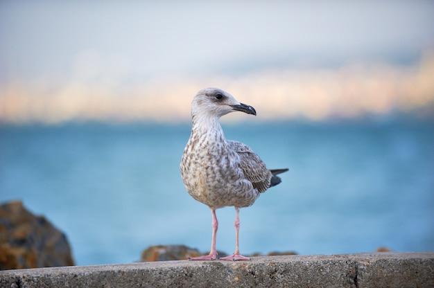 De vogelzitting van de zeemeeuw dichtbij de waterrand