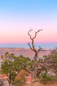 De vorm van een mooie droge boom op de achtergrond van de grand canyon in de zonsondergang