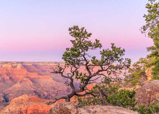 De vorm van een prachtige boom op de achtergrond van de grand canyon in de zonsondergang