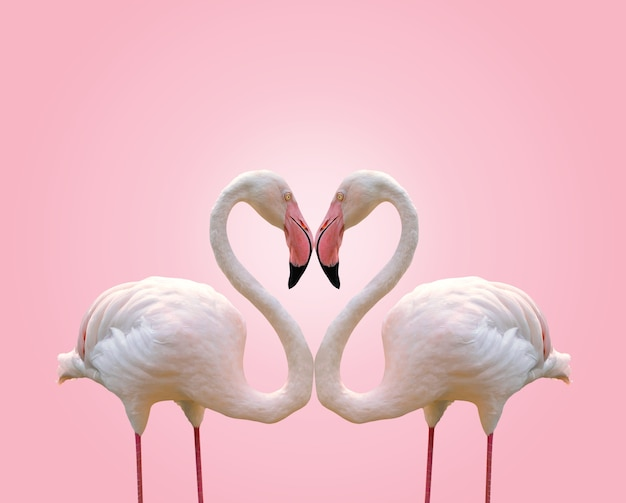 De vormhart van het liefdeconcept van paarflamingo op roze achtergrond