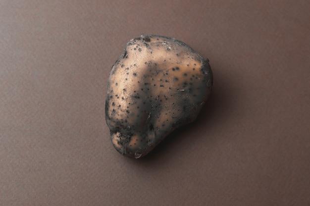 De vreemde, grote, organische lelijke gemuteerde gekartelde aardappel met insectenbeten ging slecht