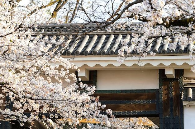 De vrij witte bloesem van de perzikboom