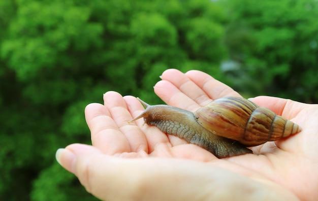 De vrouw overhandigt brengend een kleine bruine slak terug naar de aard, vage groene struik op achtergrond