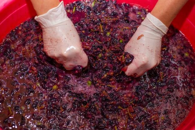 De vrouw produceert druivenwijn. vrouwenhanden in handschoenen in een bassin met druivencake, die het sap eruit persen.
