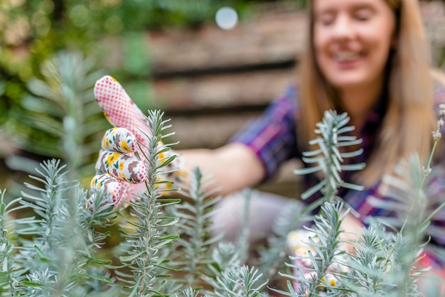 De vrouw verzamelt vers rozemarijnkruid in de tuin