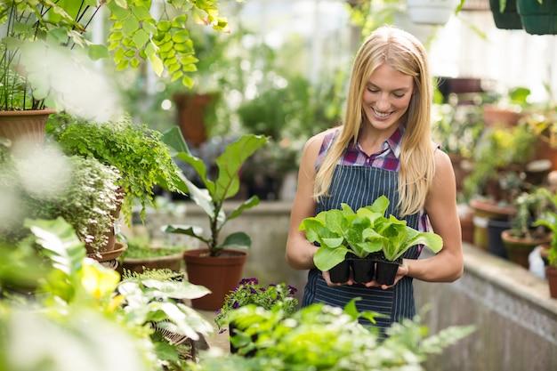De vrouwelijke jonge boompjes van de tuinmanholding bij serre