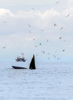 De walvis van bryde, de walvis van eden, die vissen eet bij de golf van thailand.